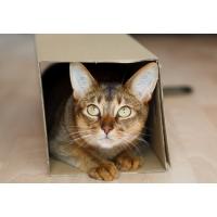 Les chats sont « naturellement » propres pourvu qu'ils aient la bonne litière