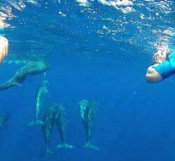 Pouvoir observer des dauphins sauvages ou nager avec eux en mer Méditerranée !